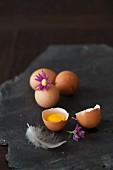 Eier, ganz und aufgeschlagen, mit Feder und Blumen auf schwarzem Stein