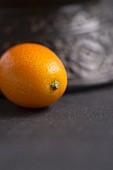 Einzelne Kumquat vor einem Tongefäss