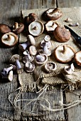 Purple wood blewits and shiitake mushrooms