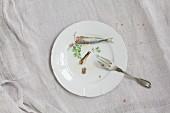 Weisser Porzellanteller mit Sardinenteilen, Öl und Petersilie