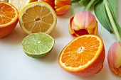 Various halved citrus fruits and tulips