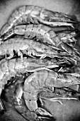 Raw king prawns (black-and-white image)