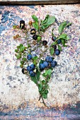 Sprig of blackberries and sloes with leaves and fruit on a weathered stone surface