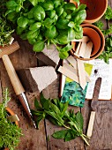 Various fresh herbs and garden tools