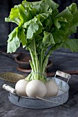 May turnips