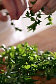 Hands tearing parsley leaves from stems