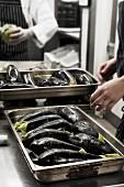 Auberginen auf Backblech, zum Braten vorbereitet, in der Grossküche