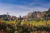 Monforte d Alba, Piemonte, Italy.