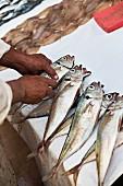 Fisch auf dem Fischmarkt von Essaouira, Marokko