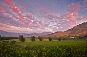 Red tinted clouds over Chardonnay vineyard of Haras de Pirque, Pirque, Maipo Valley, Chile. [Maipo Valley]