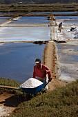 Männer sammeln Salz aus den Gezeiten-Salzpfannen in Cahuil, Colchagua, Chile