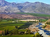 Vineyards of Viña San Esteban by the Aconcagua River, Chile. [Aconcagua Valley]