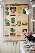 Vintage Tafel an Wand mit Abbildungen von Salatsorten