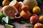 Zitrusfrüchtestillleben mit Kumquats, Blutorange, Mandarine, Zitrone, Orange und Grapefruits