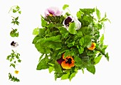 Wild herb salad with pansies