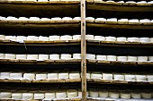 Portuguese cheese drying on wooden shelves
