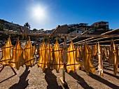 Stockfisch, zum Trockenen aufgehängt (Portugal)