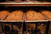 Brote in den Backformen in einer Bäckerei