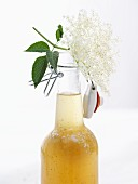 Elderflower syrup and elderflowers