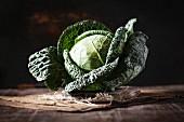 A savoy cabbage