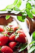 A basket of freshly picked strawberries with fresh mint