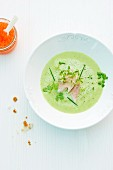 Creamy soup with herbs and smoked trout