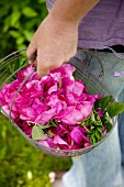 A woman holding a basket of freshly picked wild roses