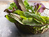 Lettuce leaves in a wire basket