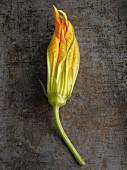 A squash flower
