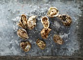 Fresh oysters on a metal surface