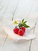 Kirschtomaten mit Blatt und Blüte auf Tuch