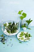 An arrangement of various freshly harvested wild herbs