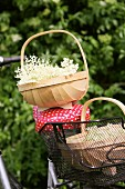 Freshly harvested elderflowers in baskets on a bicycle