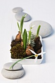 Snowdrops with moss in a white dish surrounded by grey pebbles