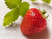 Eine Erdbeere mit Blatt (Close Up)