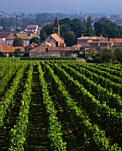 Blick vom Weinberg auf das Dorf Viré, Burgund, Frankreich