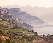 Weinterrassen an der Amalfiküste