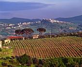 Weingut in der Basilicata, Süditalien