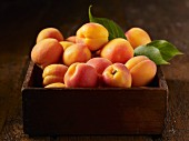 A wooden box full of fresh apricots with leaves