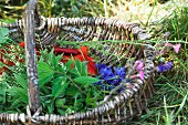 A basket of edible wild herbs (meadowsweet, cleaver, poppies, cornflowers, cranesbills)
