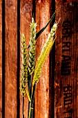 Getreideähren vor Holzkiste