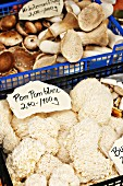 Pom Pom Blanc mushrooms and king trumpet mushrooms at a market