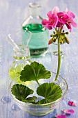 A pink geranium in a narrow glass vase