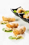 Spring rolls on sauerkraut salad