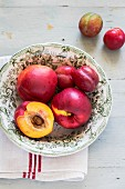 Nectarines in a porcelain bowl