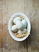 Blue eggs in a bowl