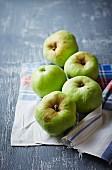 Polnische Antonowka Äpfel auf Tuch