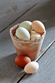 Organic farm-eggs in clay pot