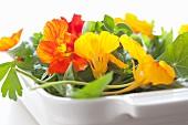 Nasturtium flowers in a baking dish