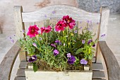 Various flowers and lavender planted in an old wooden box on a chair